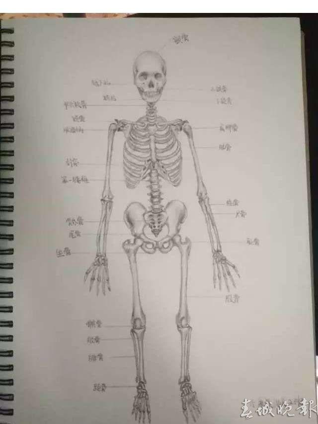 解剖手绘图